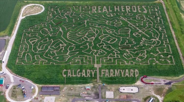 Лабиринты из кукурузы на ферме Калгари в Канаде