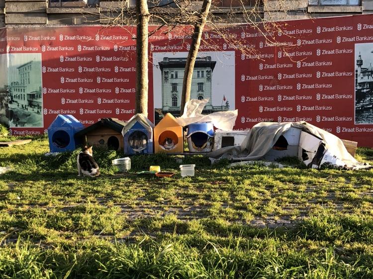 Кормушки для бездомных животных в Турции