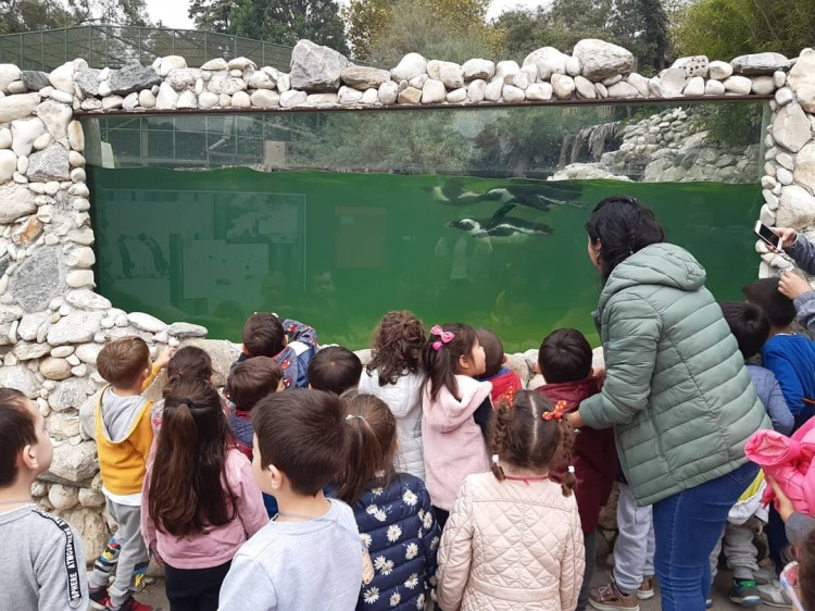 Бассейн пингвинов, зоопарк в Стамбуле