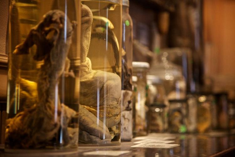 Экспонаты музея фаллосов в Исландии