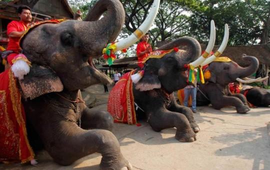 Праздники и фестивали Таиланда - изображение №1