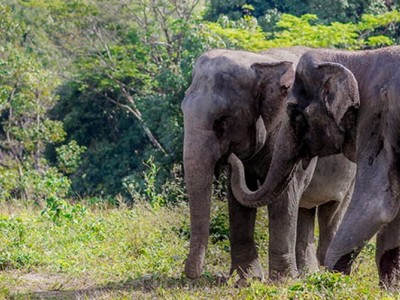Заповедник «Убежище слонов» на Пхукете