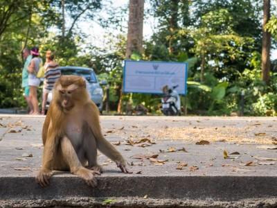 Гора обезьян на Пхукете