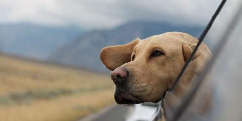 Необходимые документы и требования для перевозки самолетом собак и кошек
