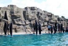 Аквариум и дельфинарий в Батуми