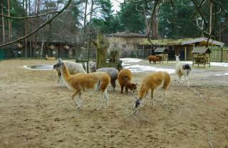 Зоопарк в Тбилиси, аквариум, аттракционы и конный клуб