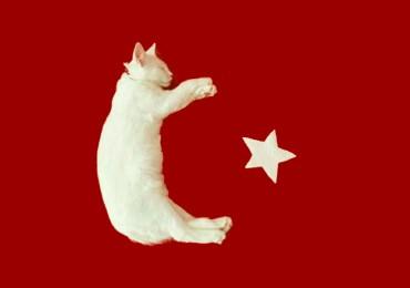Кошкин дом. Или почему в Турции много кошек