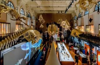 Океанографический музей, Монако