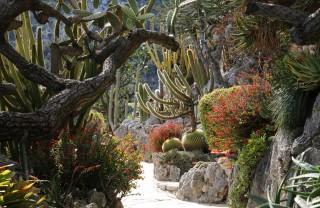 Экзотический Сад, Монако