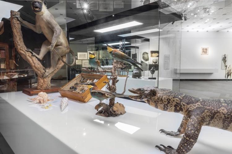 Музей природы и археологии, Тенерифе