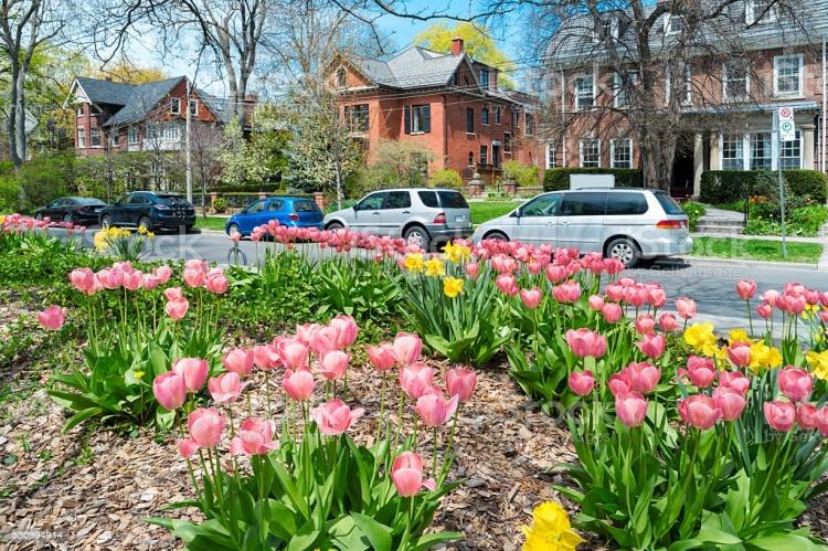 Весна в Торонто