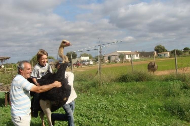 Что посетить с детьми на Майорке, Страусиная ферма Артеструз