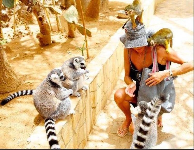 Парк обезьян на Тенерифе, посетить с детьми