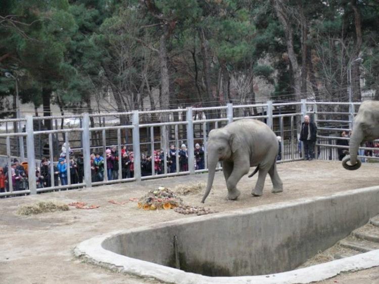 Зоопарк в Тбилиси, фото