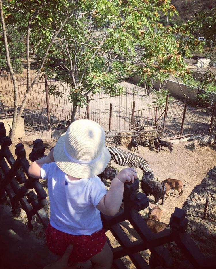 Тбилисский зоопарк в Грузии