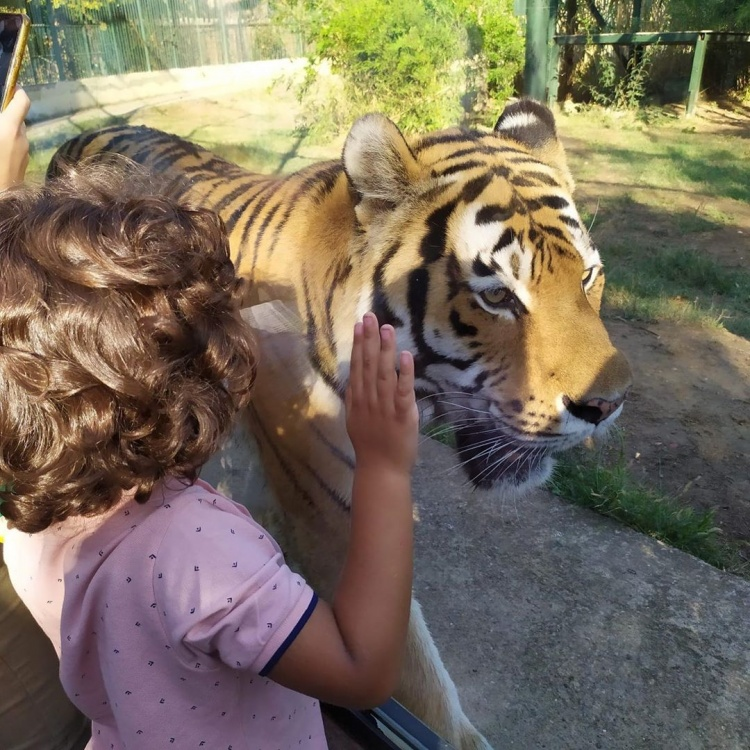 Стамбульский зоопарк, что посмотреть