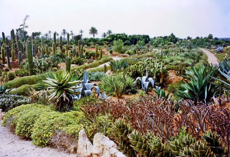 Ботаникактус, парк в Сес-Салинес
