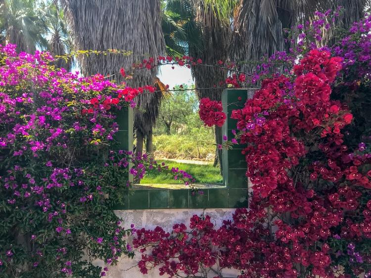 Ботанический сад Пальмы, фотоозонны