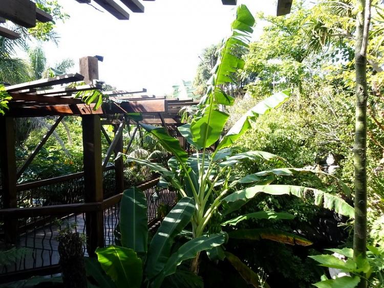 Джунгли, аквариум Пальмы, Майорка