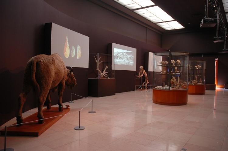 Музей антропологии в Монако