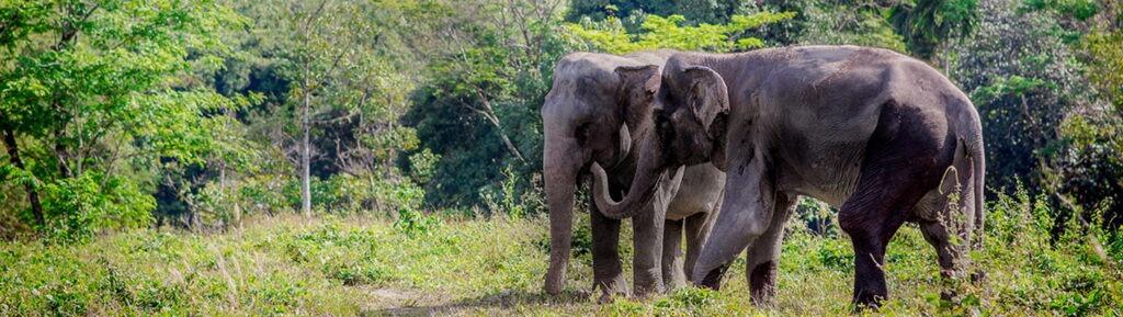 Заповедник Убежище слонов на Пхукете