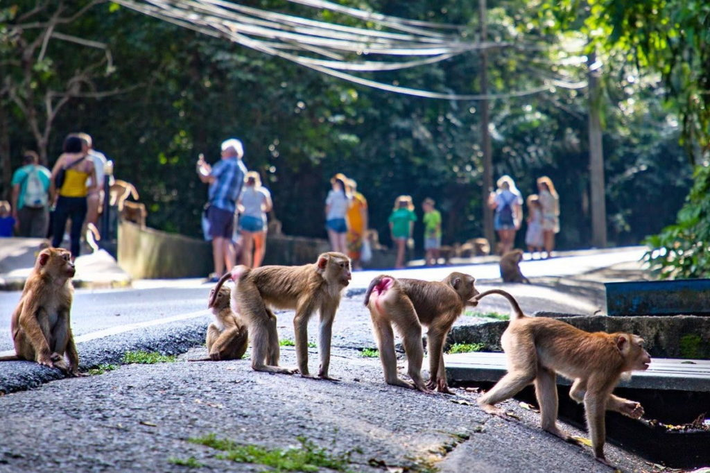 Парк обезьян, Пхукет