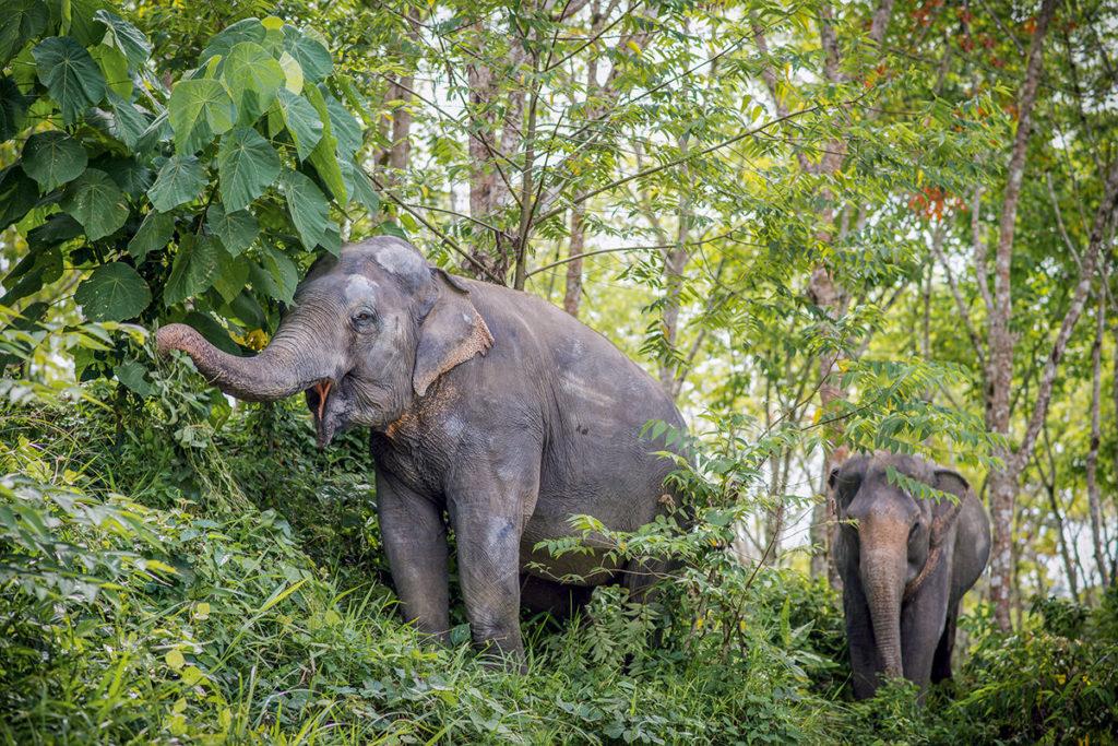 Парк слонов Пхукет