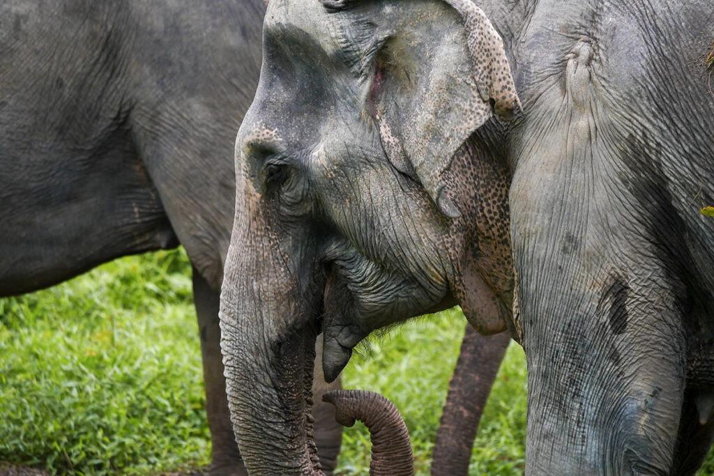 Посмотреть слонов на Пхукете - история слонов