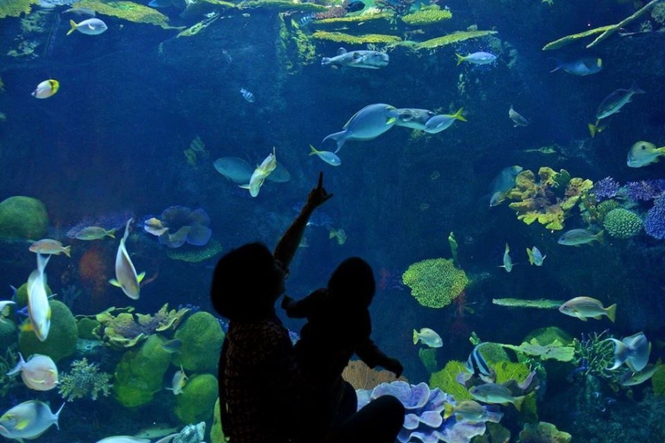 Океанариум Siam Ocean World