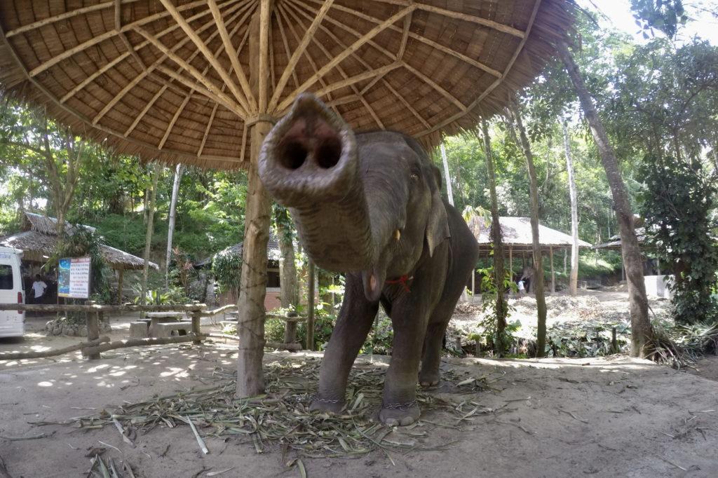 Деревня слонов в Паттайя