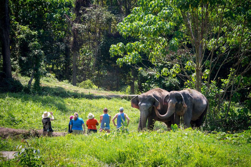 Пхукет слоны экскурсия