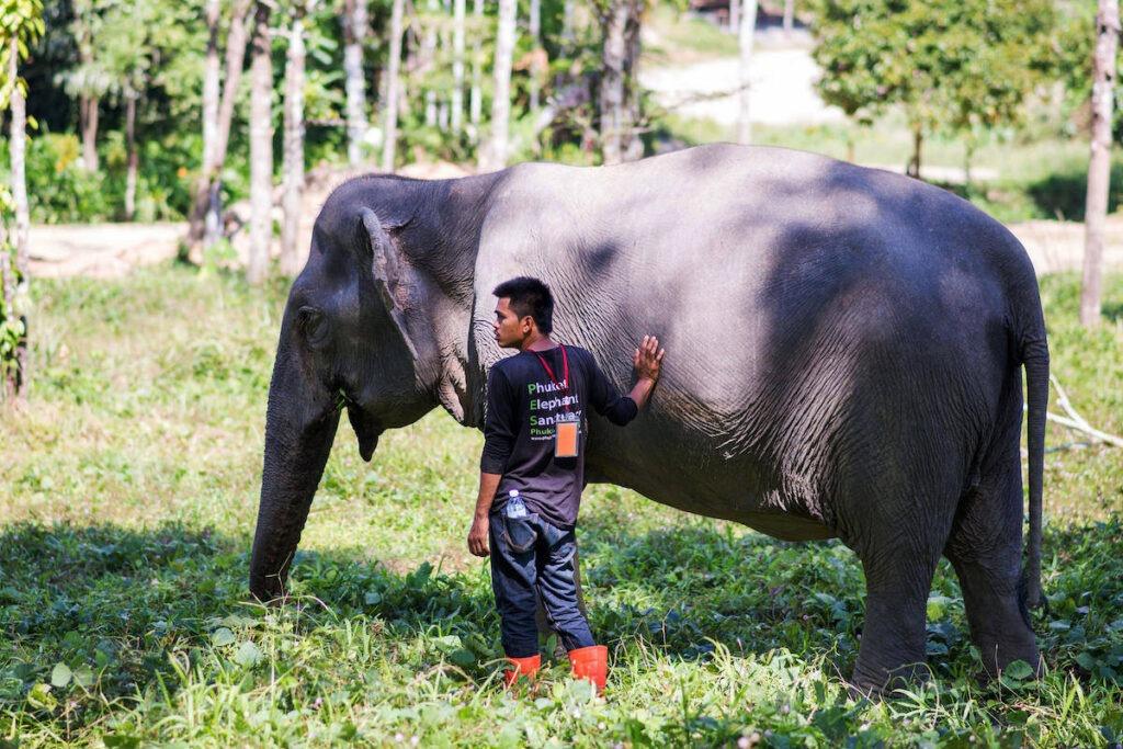 Заповедник слонов Пхукет