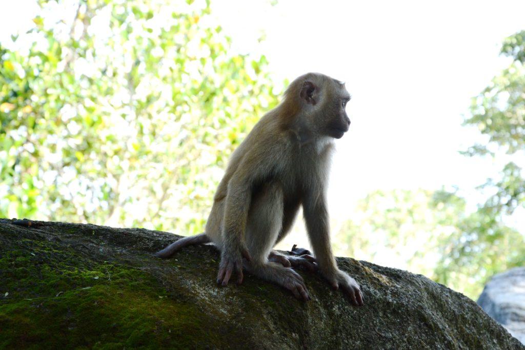 Статуя Будды, Пхукет - местные обезьянки