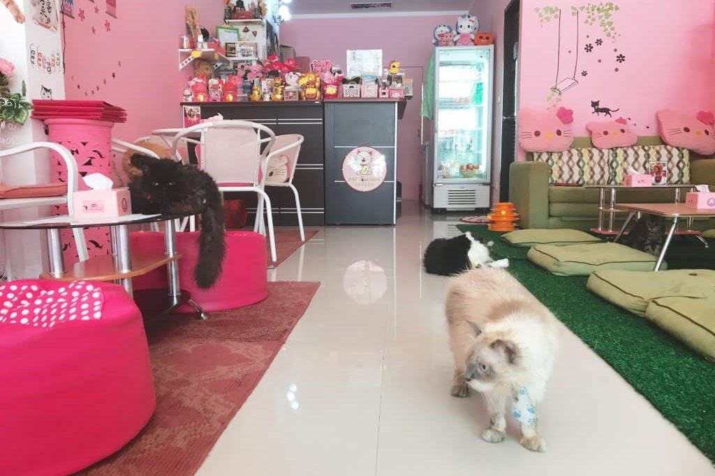 Кафе Neko Cat Cafe Пхукет