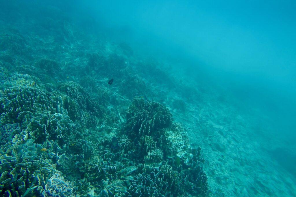 Подводный мир Тайланда
