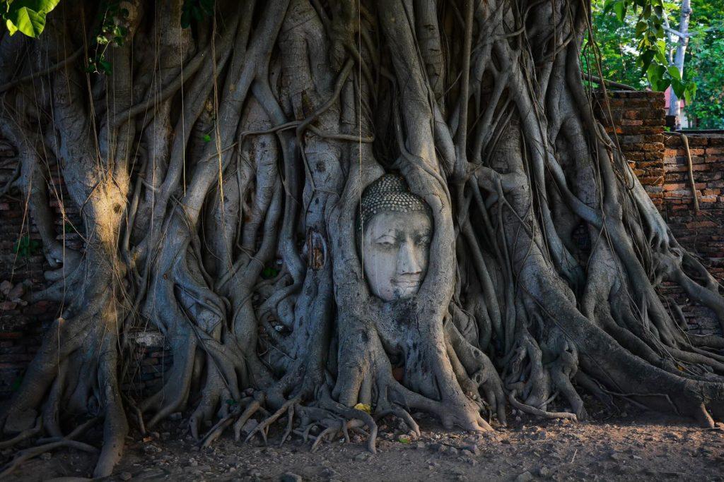 голова Будды» – главный символ Аюттайи