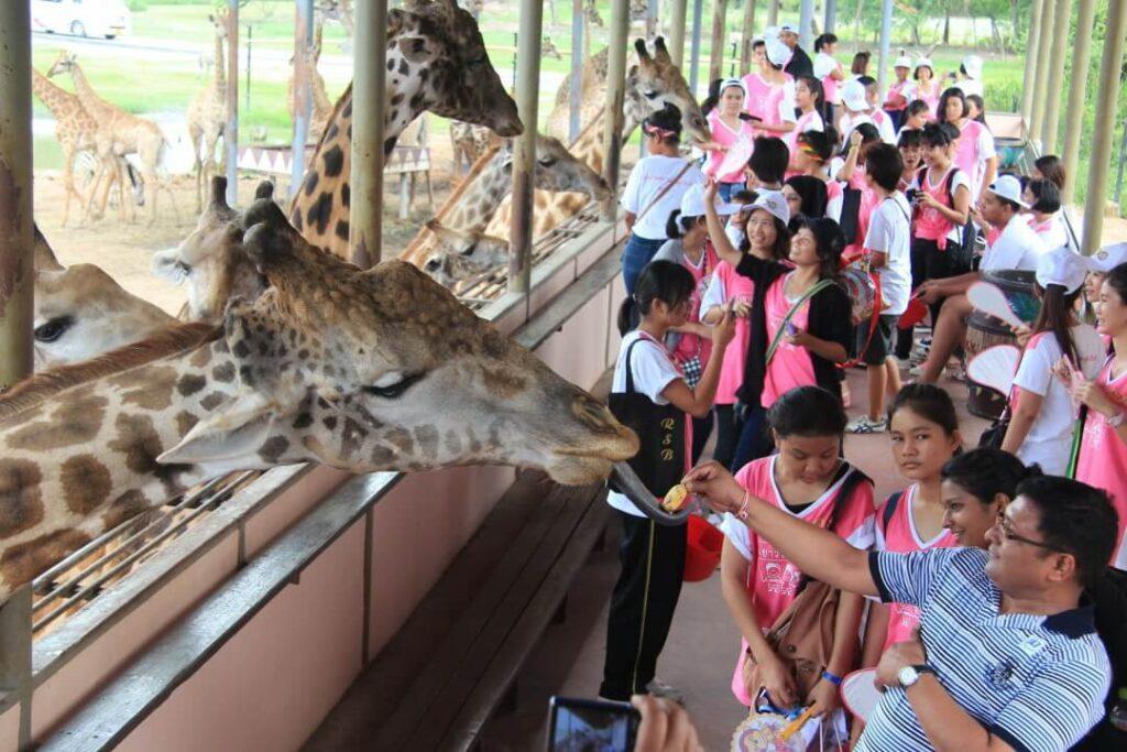 Сафари парк Бангкок купить билет