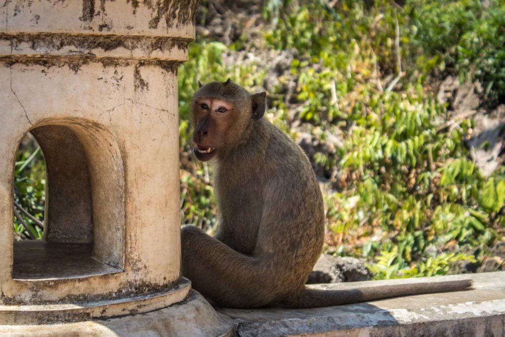 Кхао Луанг и местные обезьяны