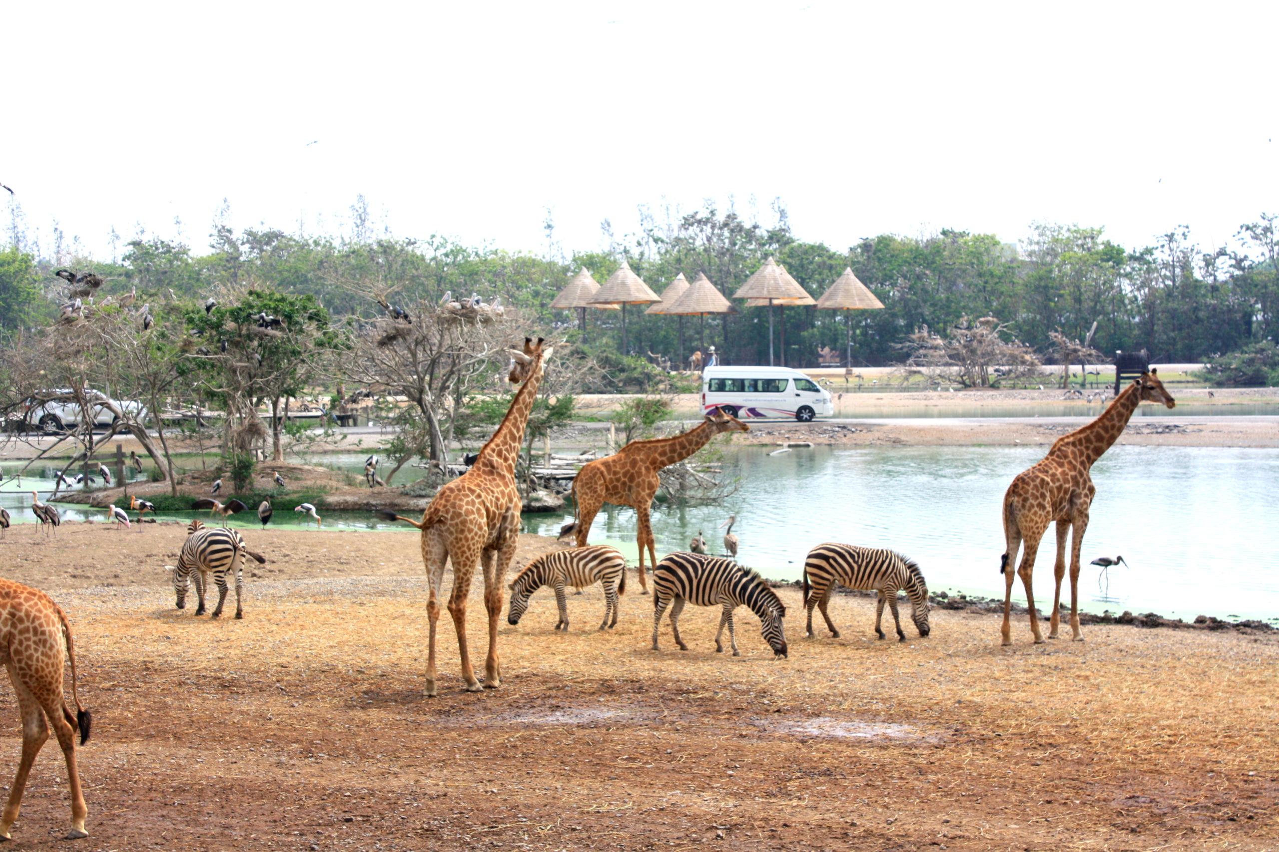 Тематический парк Мир Сафари