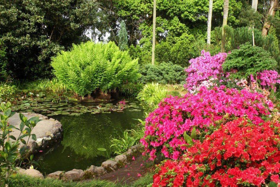 Лето в Грузии - ботанический сад Батуми