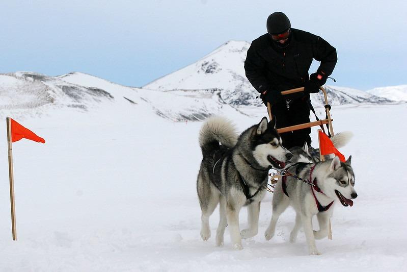 Чемпионат в собачьих упряжках в Исландии