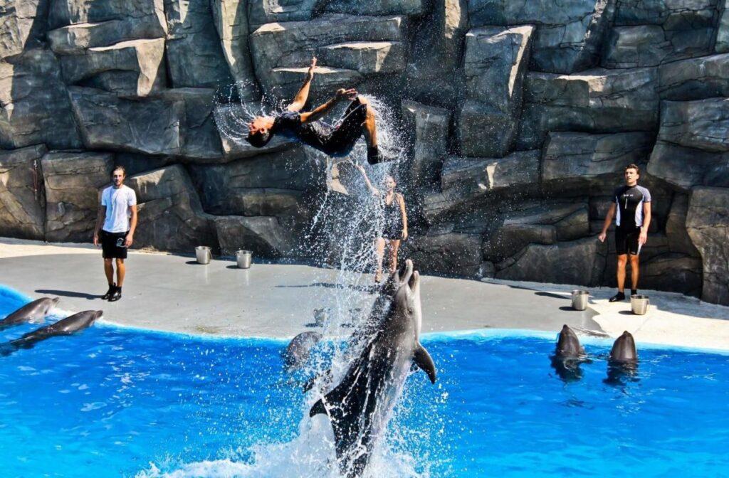 Отдых с детьми Грузия - дельфинарий в Батуми