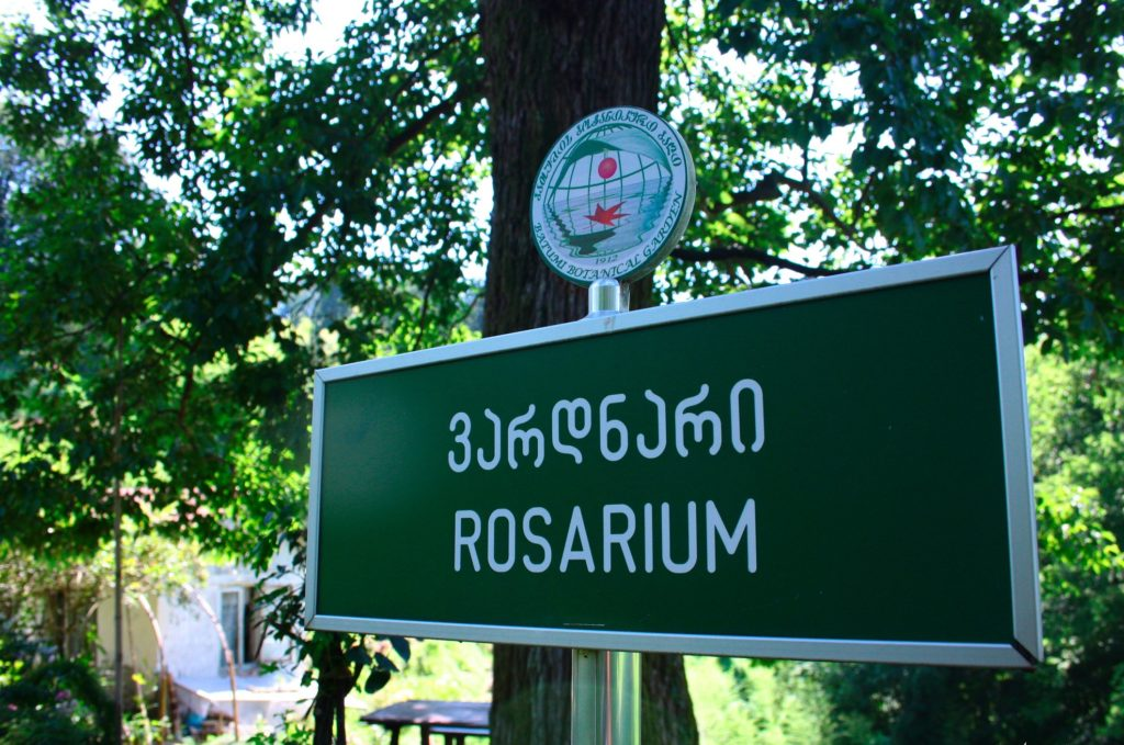 Розариум в ботсаду Батуми