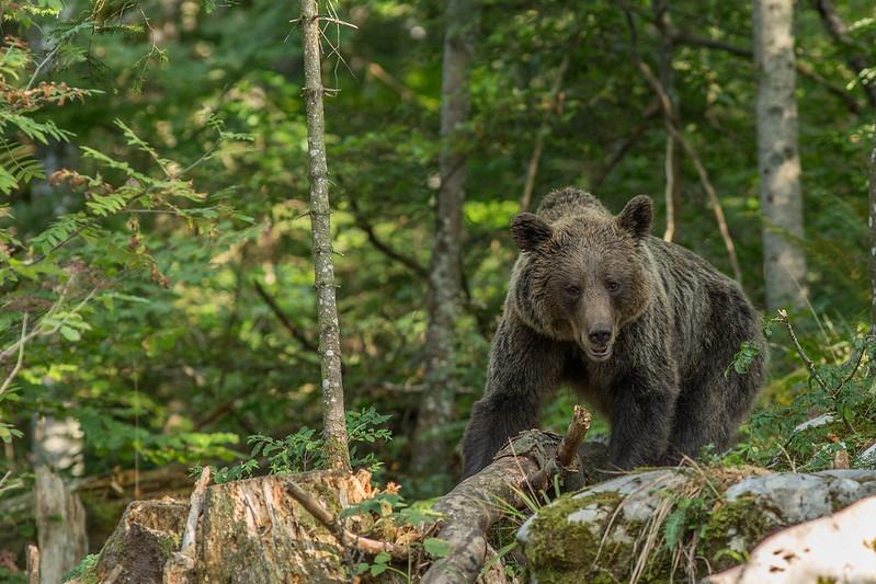 Дикие животные в Словения