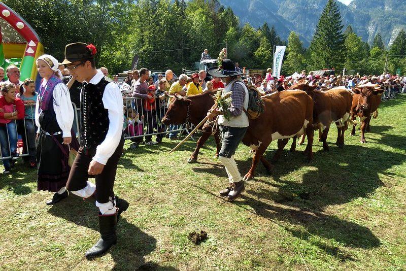 Коровий бал Словения