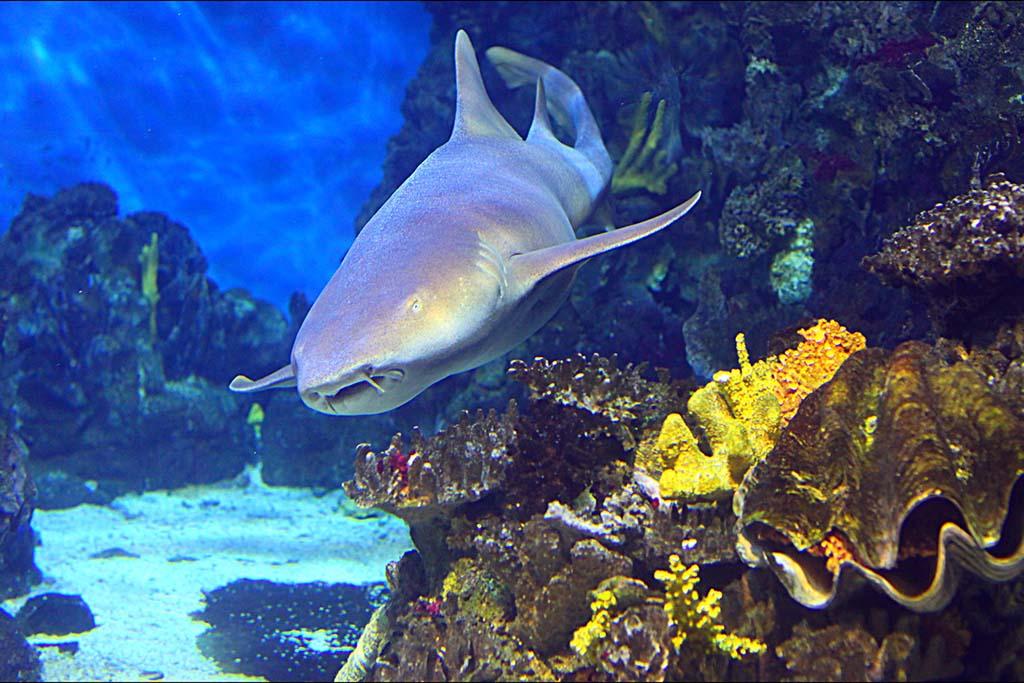 Рыбы и животные в Океанариуме Барселоны