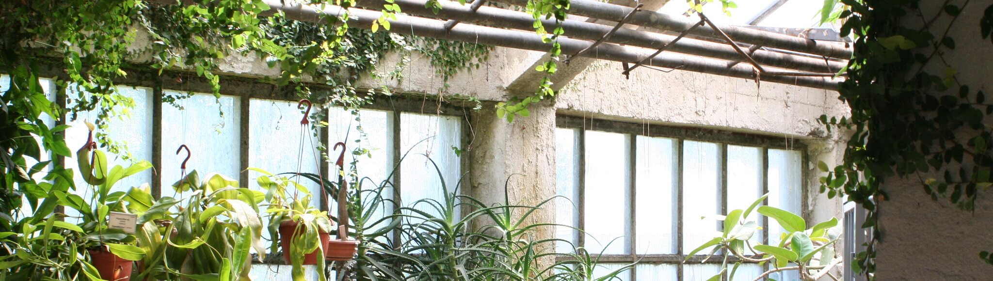 Ботанический сад Любляны