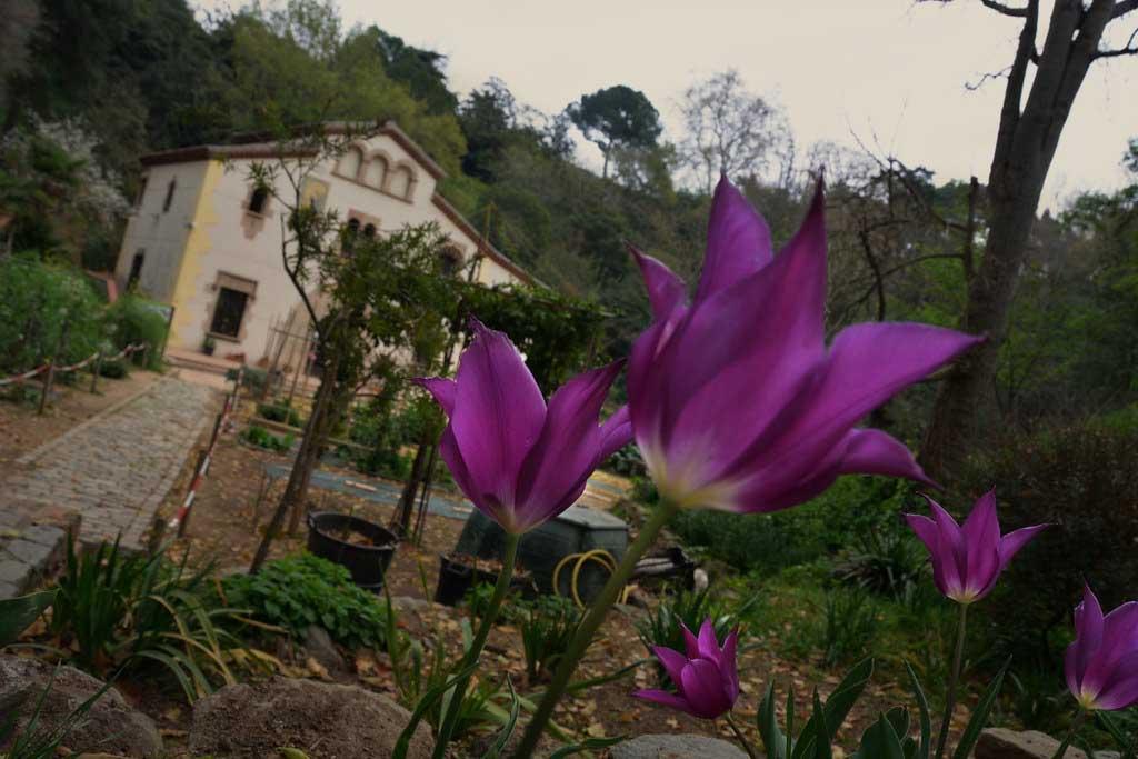 Что растет в ботаническом саду Барселоны