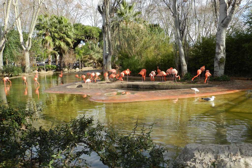 Zoo Barcelona