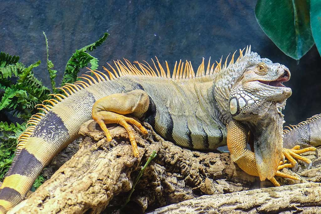 Что посмотреть в аквариуме в Барселоне